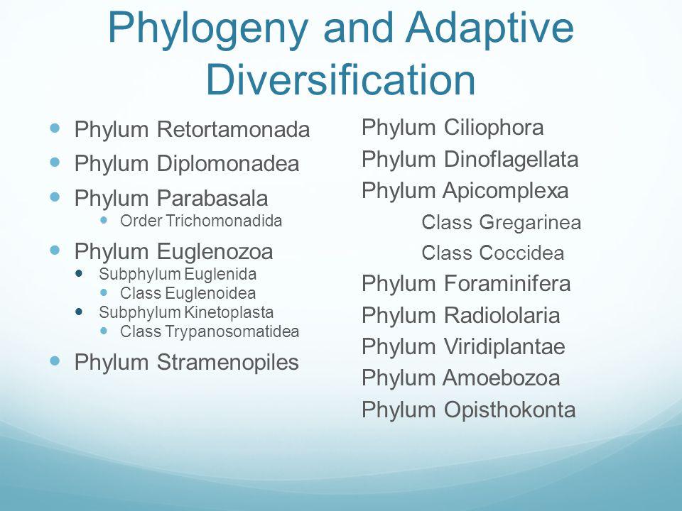 Phylogeny and Adaptive Diversification
