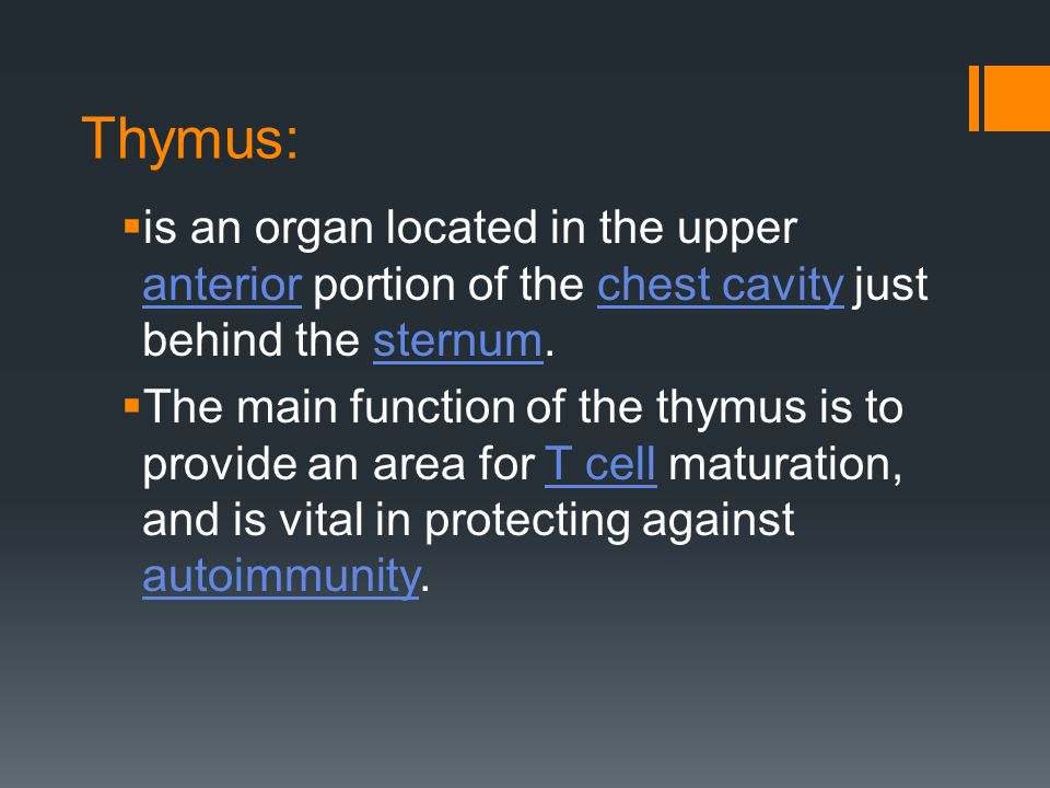Thymus: is an organ located in the upper anterior portion of the chest cavity just behind the sternum.