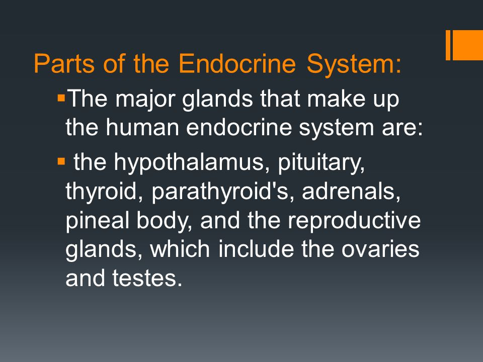 Parts of the Endocrine System: