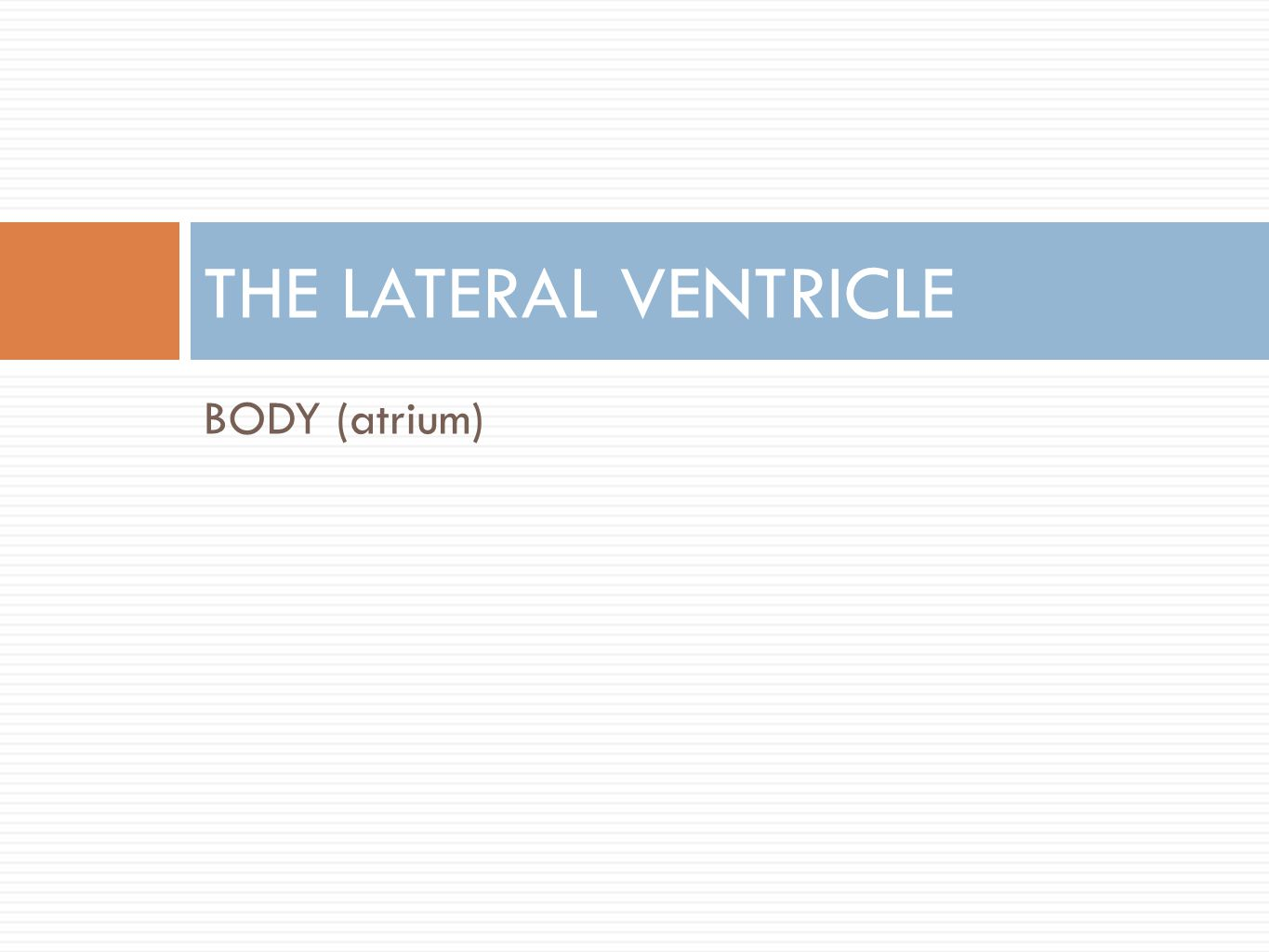 THE LATERAL VENTRICLE BODY (atrium)