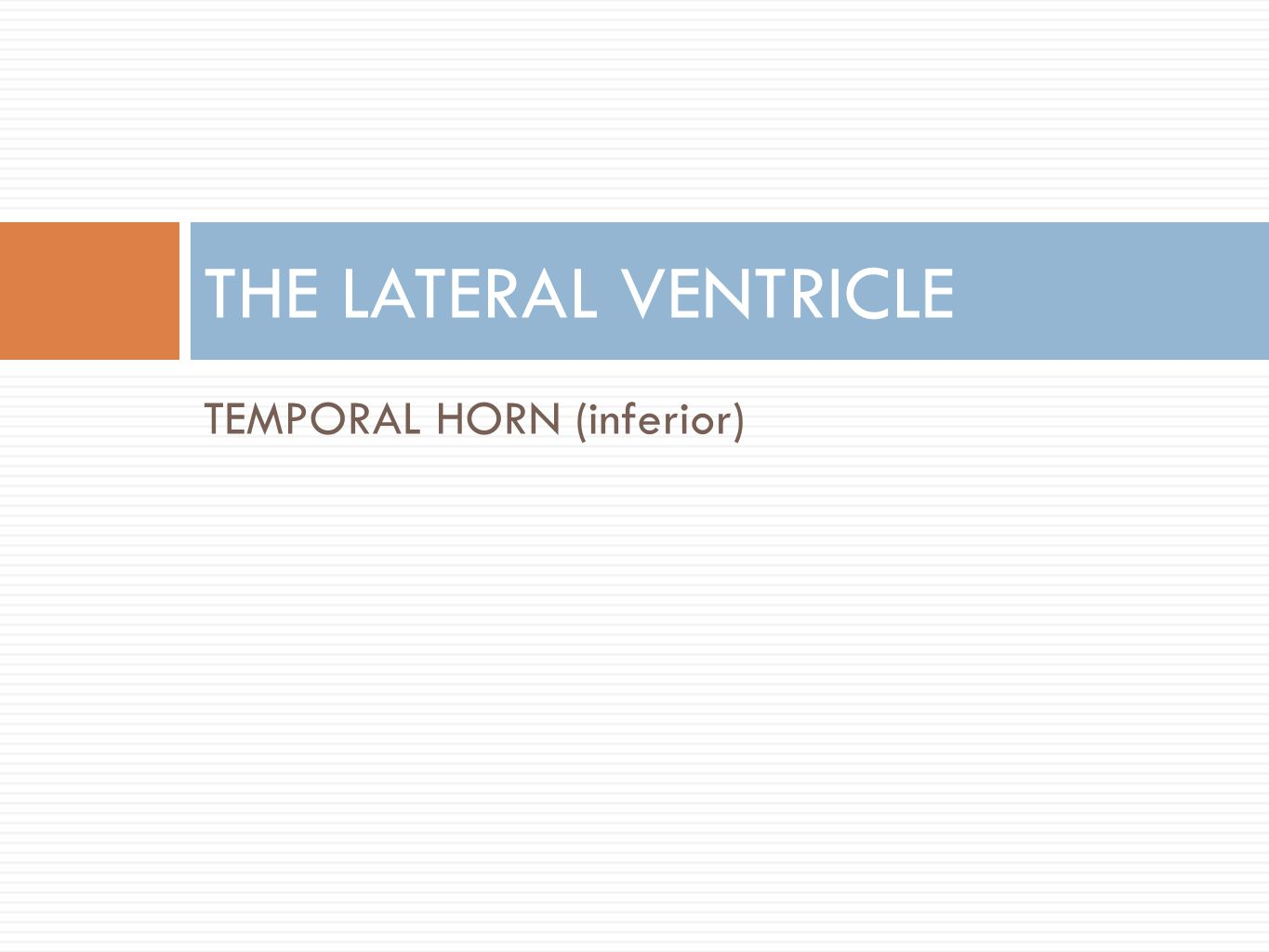 THE LATERAL VENTRICLE TEMPORAL HORN (inferior)