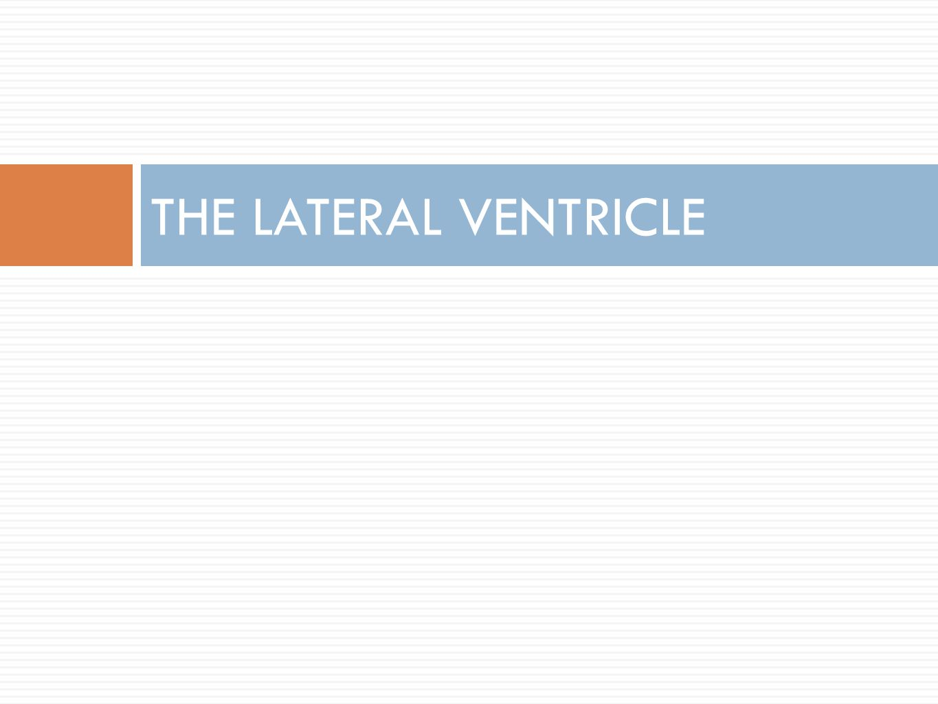 THE LATERAL VENTRICLE