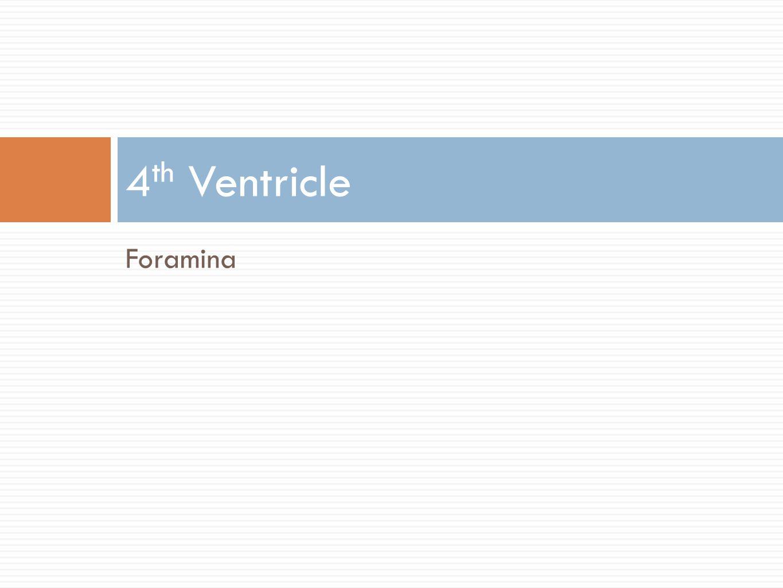 4th Ventricle Foramina