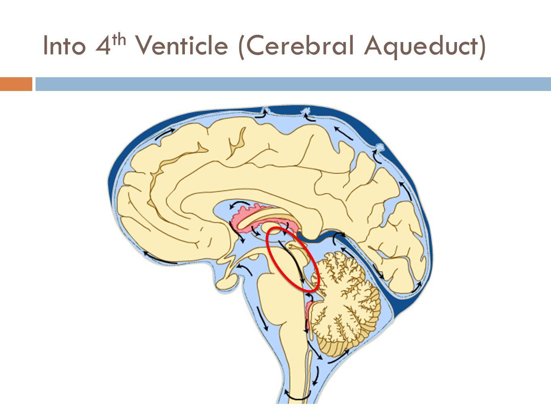 Into 4th Venticle (Cerebral Aqueduct)