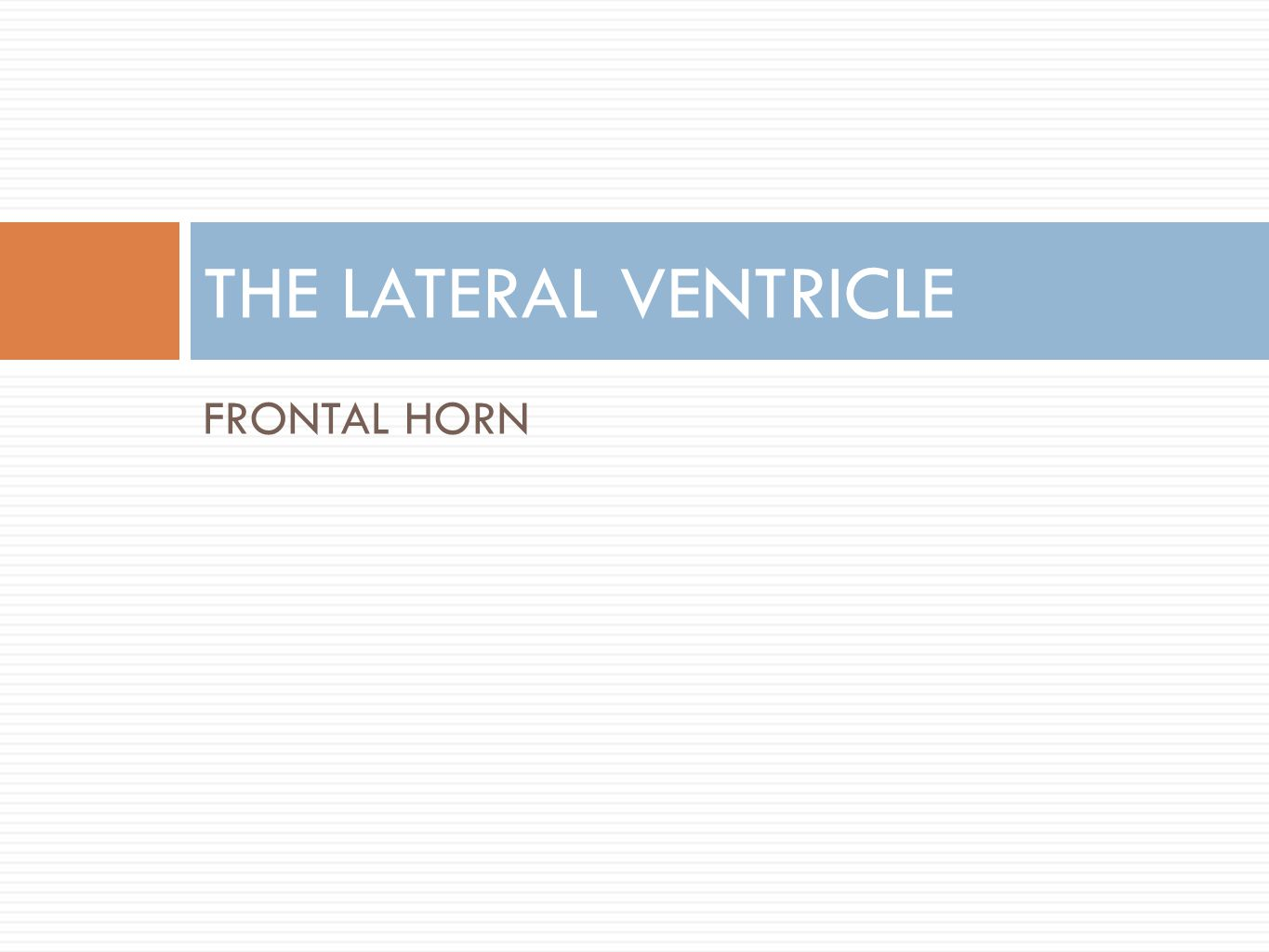 THE LATERAL VENTRICLE FRONTAL HORN