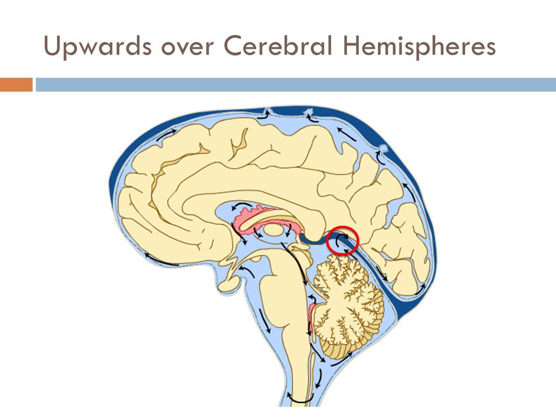 Upwards over Cerebral Hemispheres