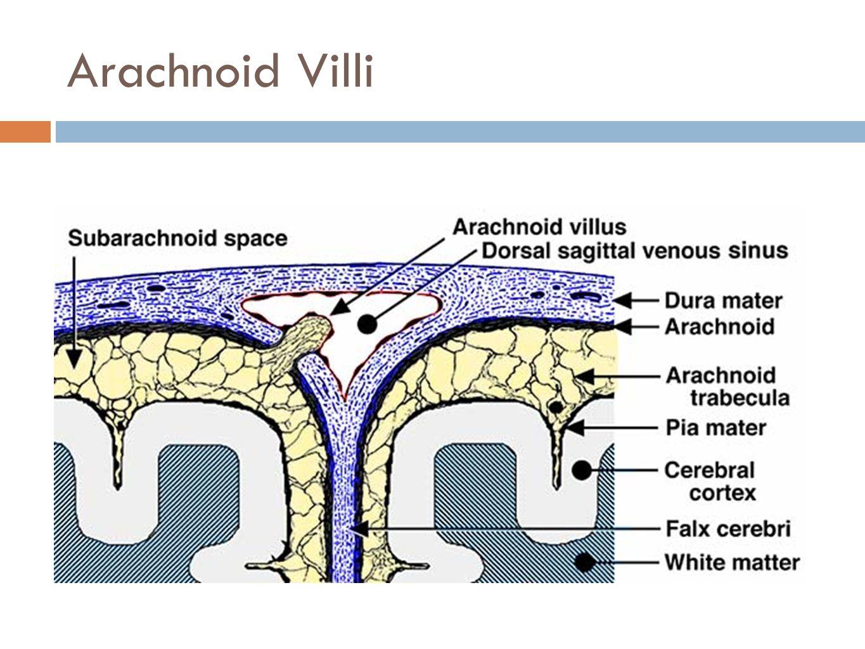 Arachnoid Villi