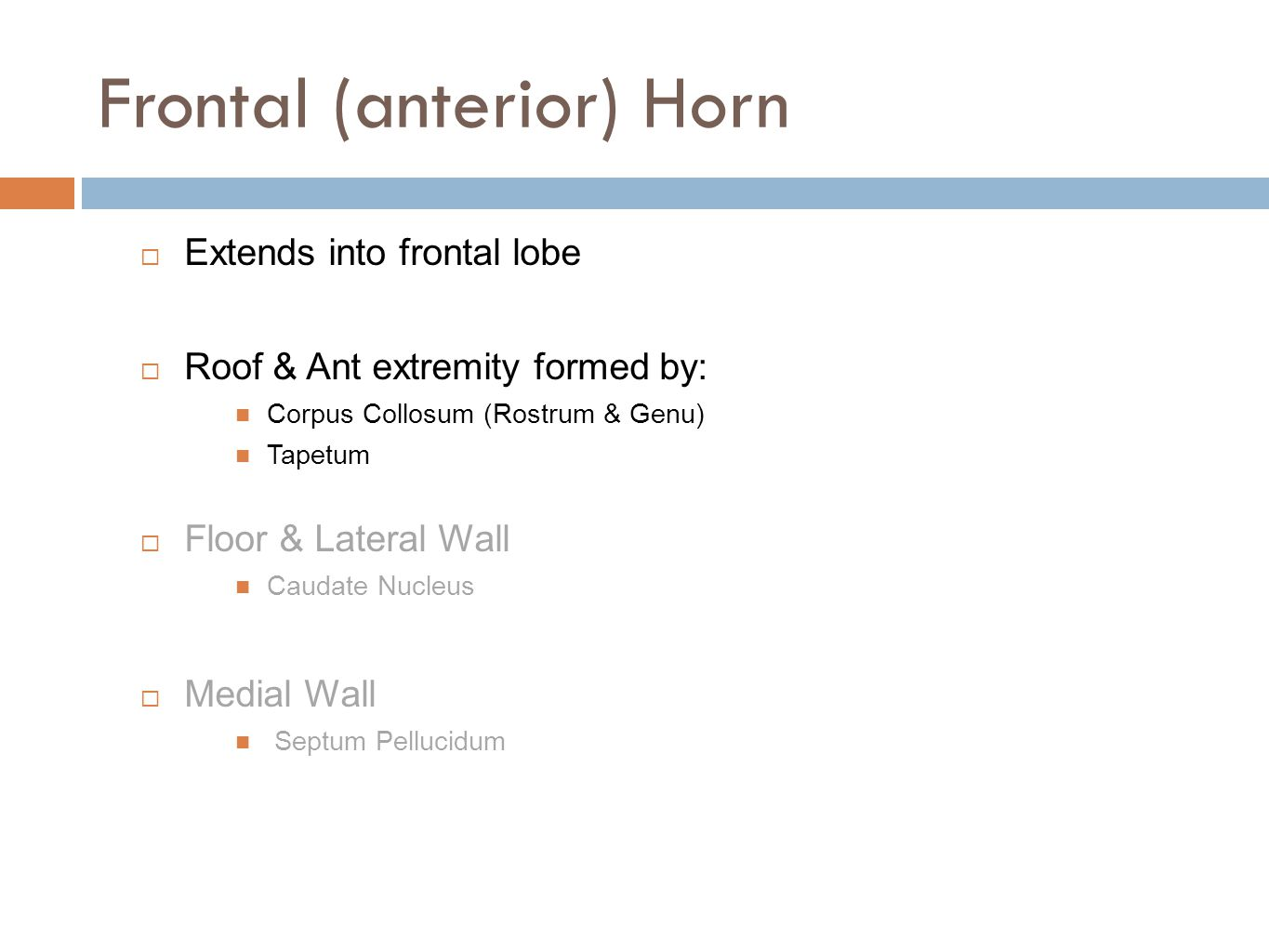 Frontal (anterior) Horn