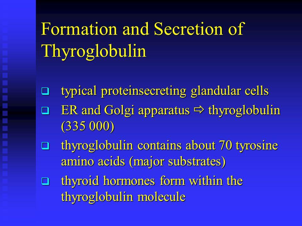 Formation and Secretion of Thyroglobulin