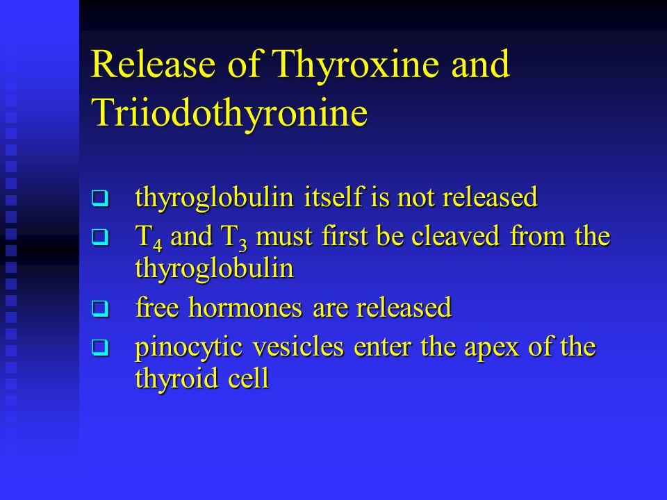 Release of Thyroxine and Triiodothyronine