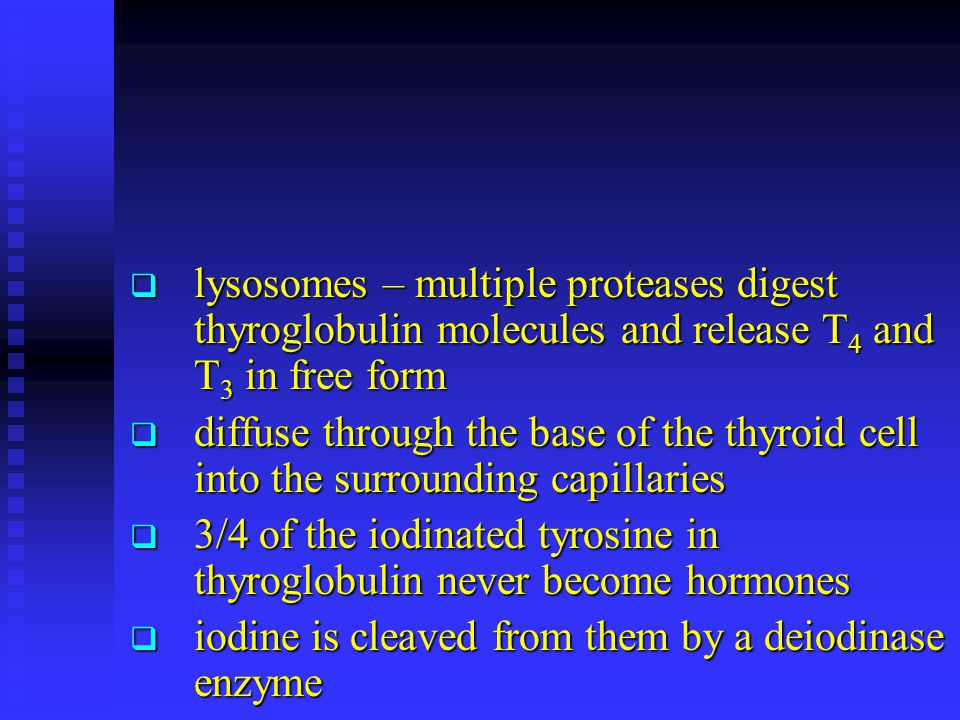 lysosomes – multiple proteases digest thyroglobulin molecules and release T4 and T3 in free form
