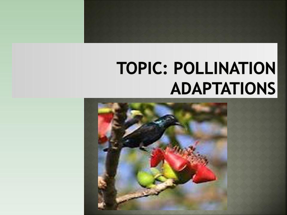 Topic: Pollination adaptations