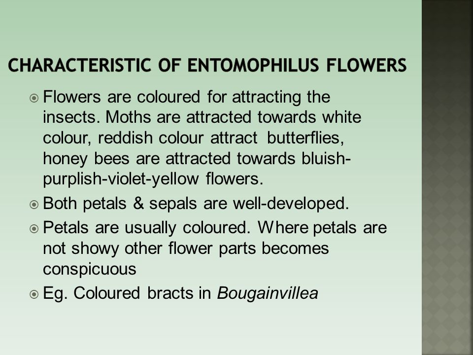 Characteristic of entomophilus flowers