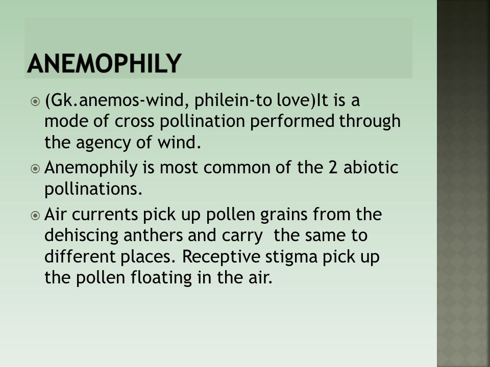 anemophily (Gk.anemos-wind, philein-to love)It is a mode of cross pollination performed through the agency of wind.