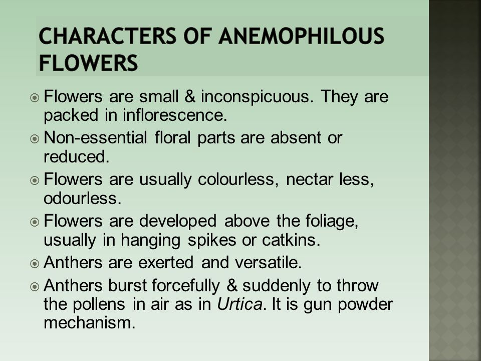 Characters of anemophilous flowers