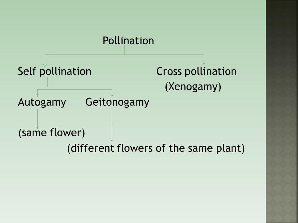 Pollination Self pollination Cross pollination (Xenogamy) Autogamy Geitonogamy (same flower) (different flowers of the same plant)