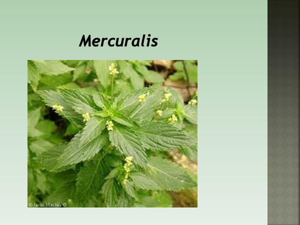 Mercuralis