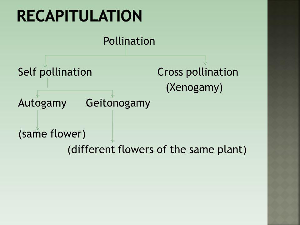recapitulation Pollination Self pollination Cross pollination (Xenogamy) Autogamy Geitonogamy (same flower) (different flowers of the same plant)