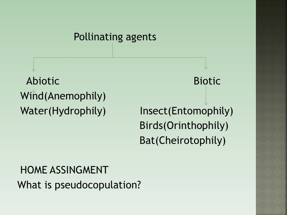 Pollinating agents Abiotic Biotic Wind(Anemophily) Water(Hydrophily) Insect(Entomophily) Birds(Orinthophily) Bat(Cheirotophily) HOME ASSINGMENT What is pseudocopulation