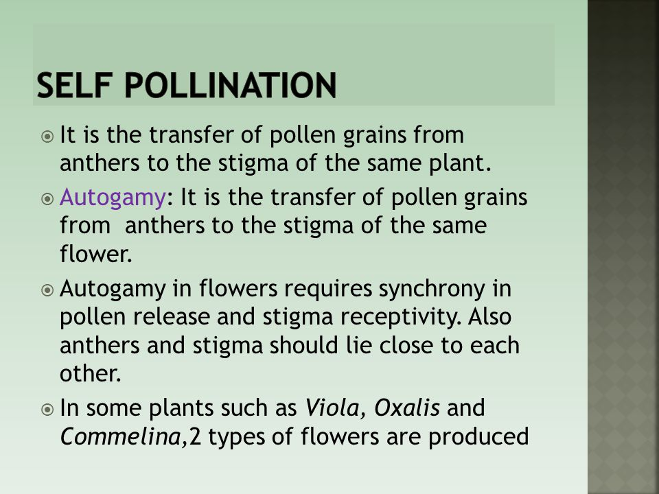 Self pollination It is the transfer of pollen grains from anthers to the stigma of the same plant.