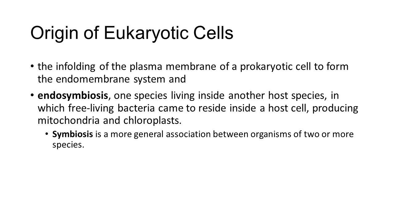 Origin of Eukaryotic Cells