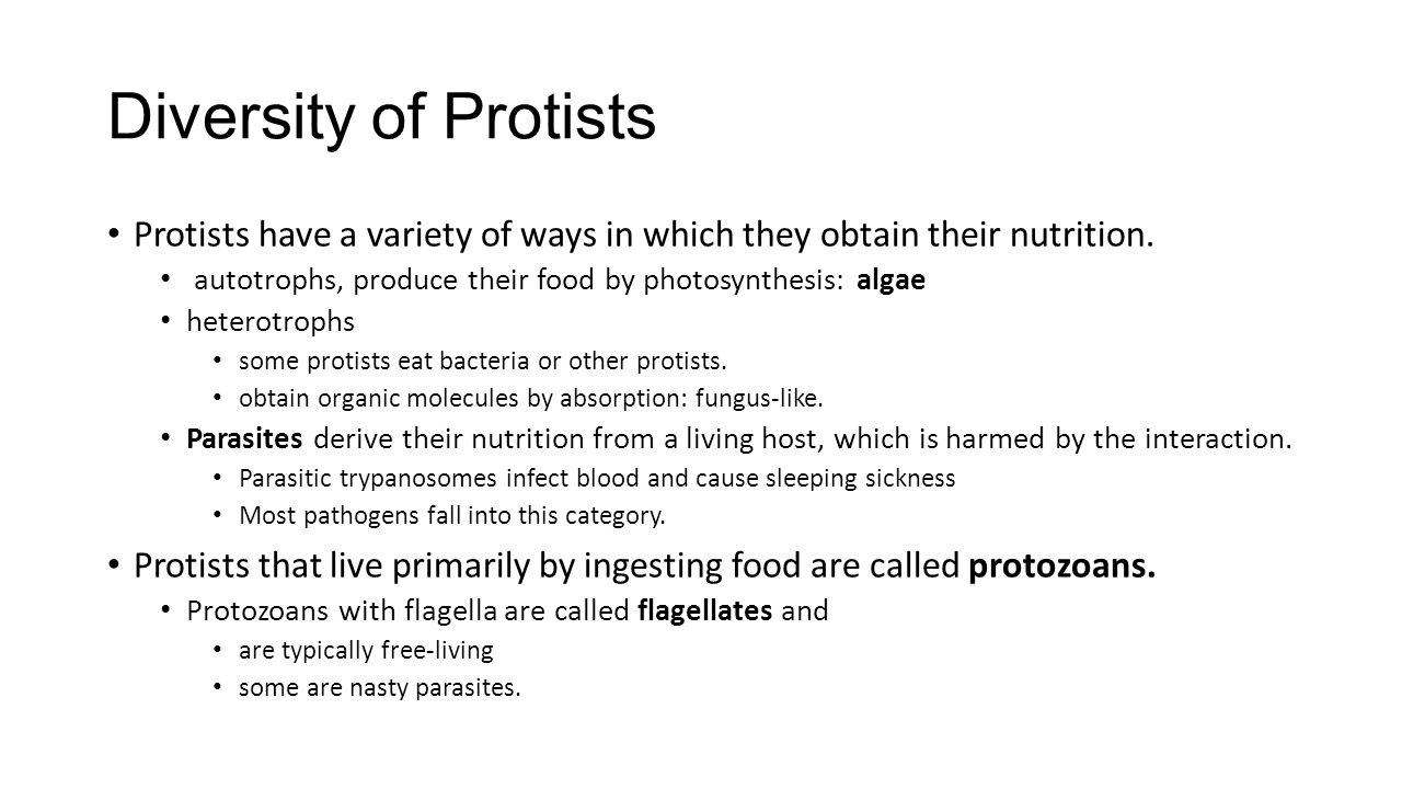 Diversity of Protists Protists have a variety of ways in which they obtain their nutrition. autotrophs, produce their food by photosynthesis: algae.