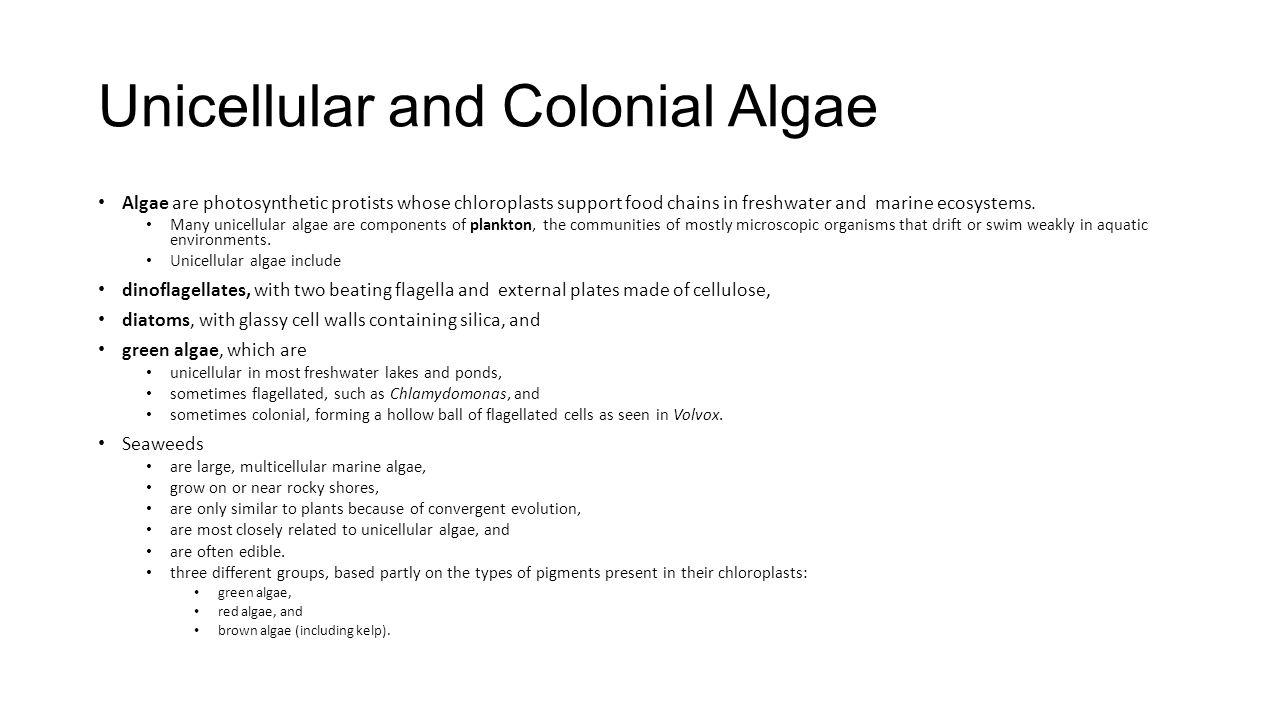 Unicellular and Colonial Algae