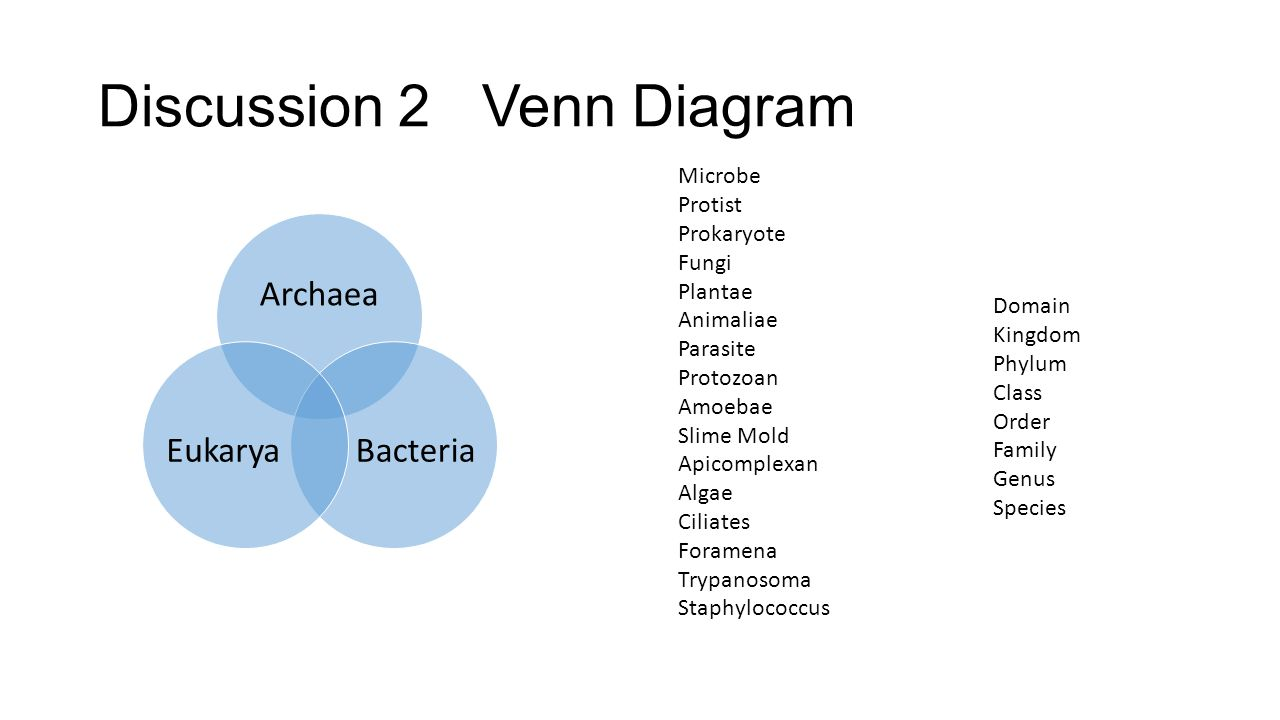 Protist bacteria virus venn diagram yelomphonecompany protist bacteria virus venn diagram 7c45 world of microbes kingdoms scientists ccuart Image collections