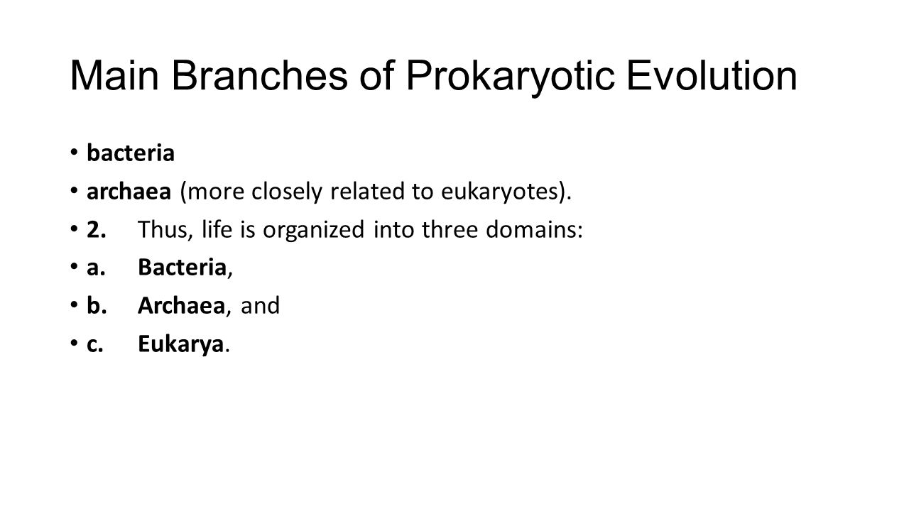 Main Branches of Prokaryotic Evolution