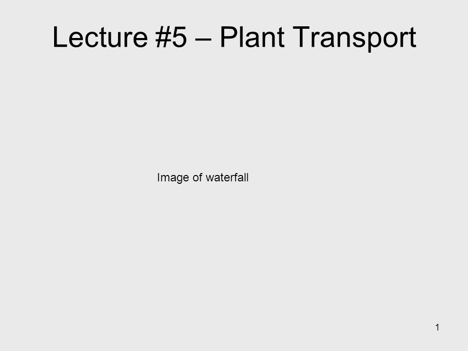 Lecture #5 – Plant Transport