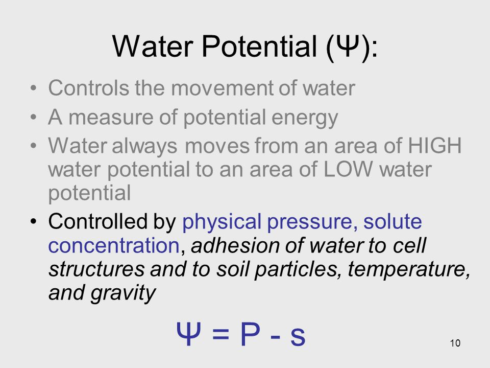 Ψ = P - s Water Potential (Ψ): Controls the movement of water
