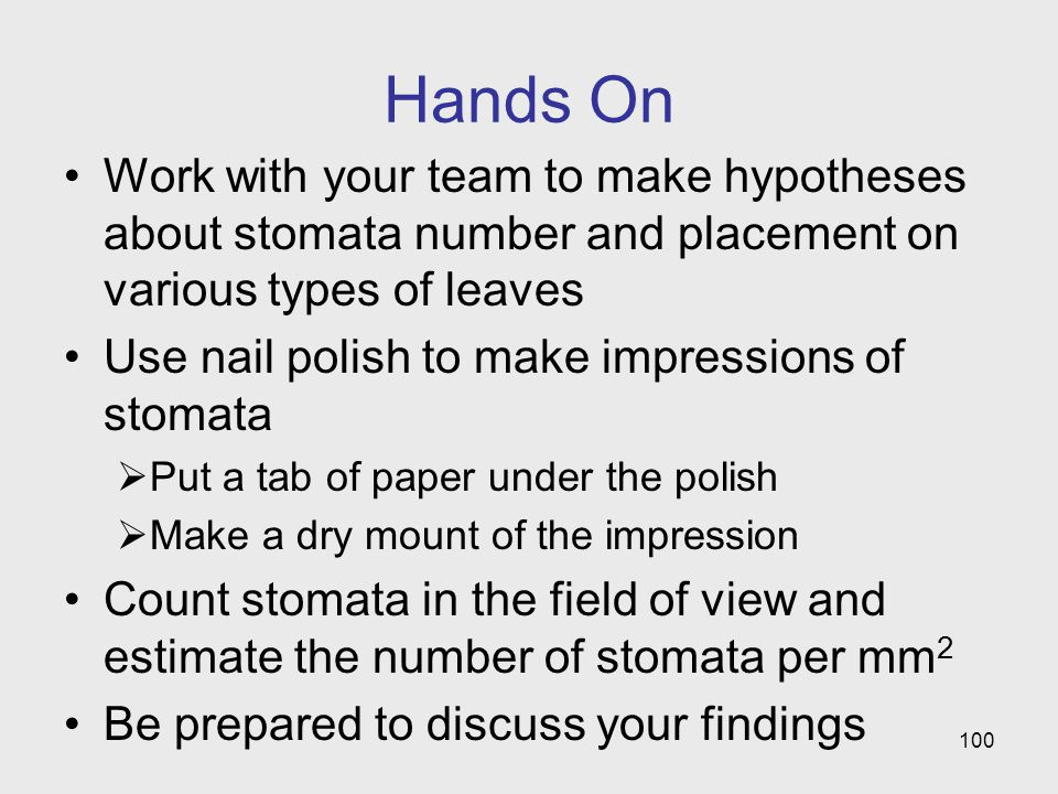 Hands On Work with your team to make hypotheses about stomata number and placement on various types of leaves.