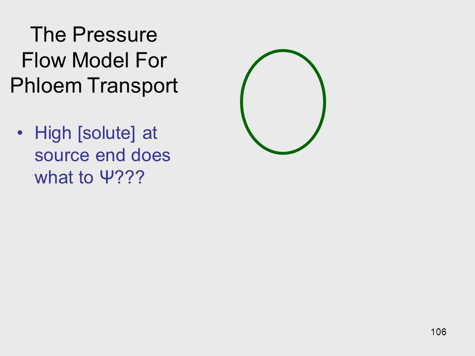 The Pressure Flow Model For Phloem Transport