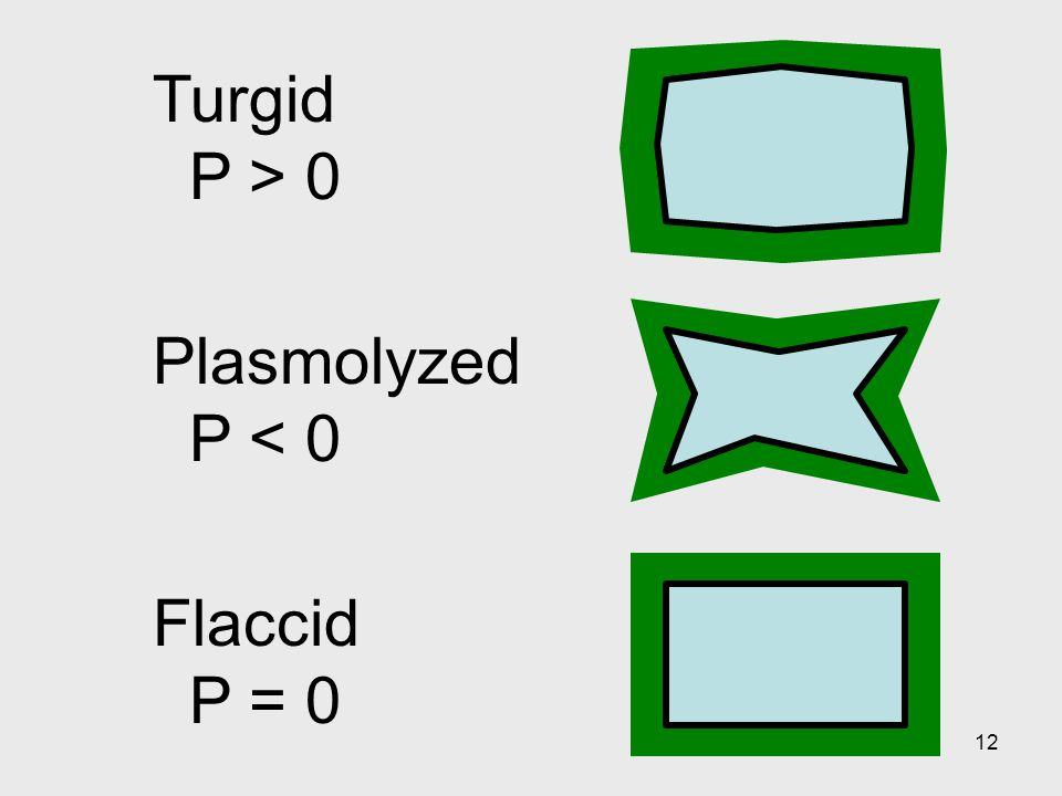 Turgid P > 0 Plasmolyzed P < 0 Flaccid P = 0