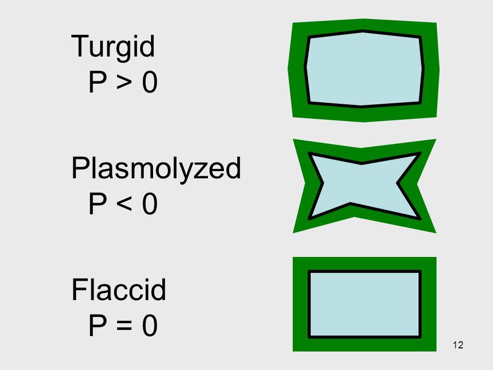 Turgid P > 0 Plasmolyzed P < 0 Flaccid P = 0