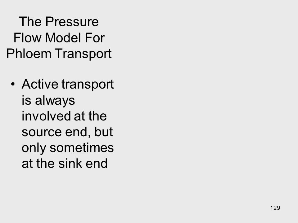 The Pressure Flow Model For Phloem Transport