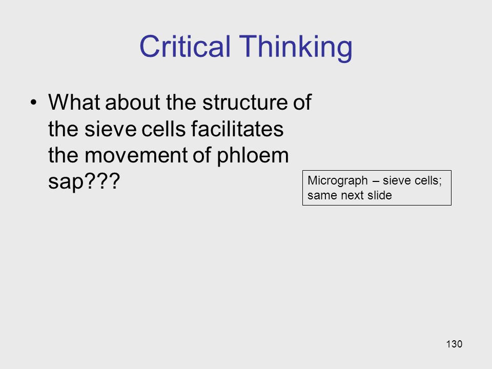 Critical Thinking What about the structure of the sieve cells facilitates the movement of phloem sap