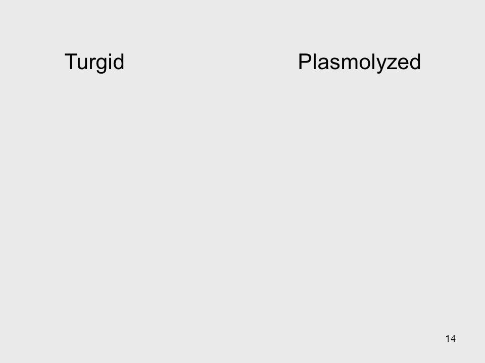 Turgid Plasmolyzed