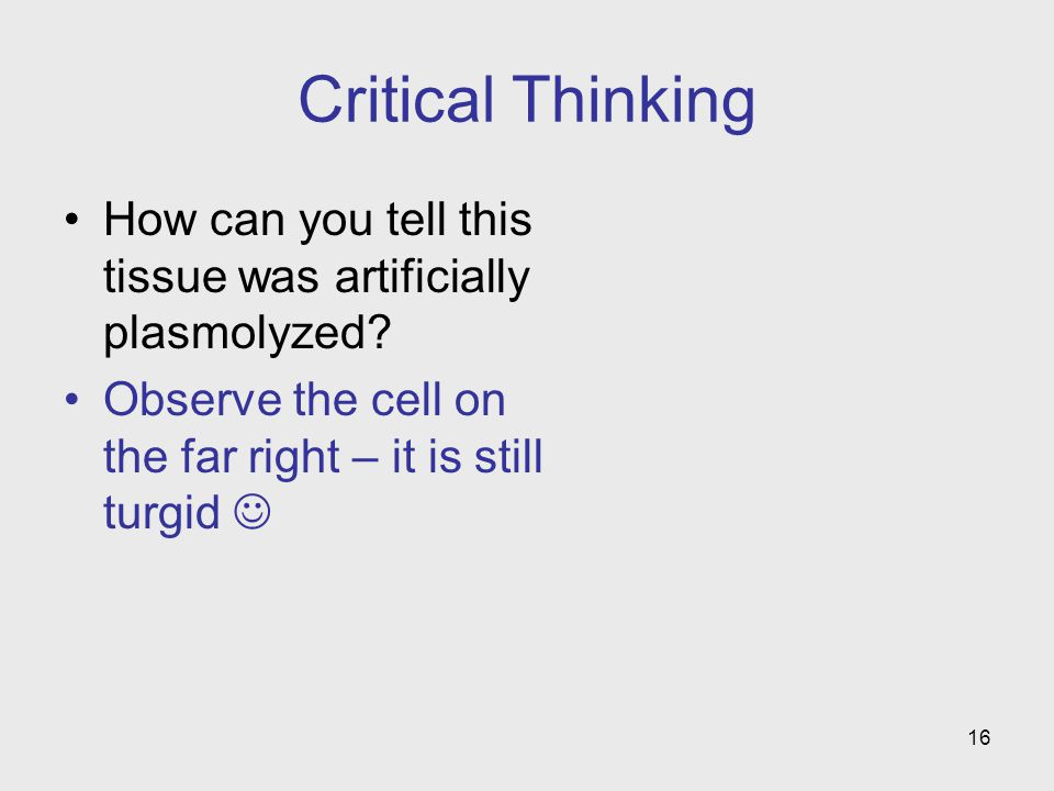 Critical Thinking How can you tell this tissue was artificially plasmolyzed.