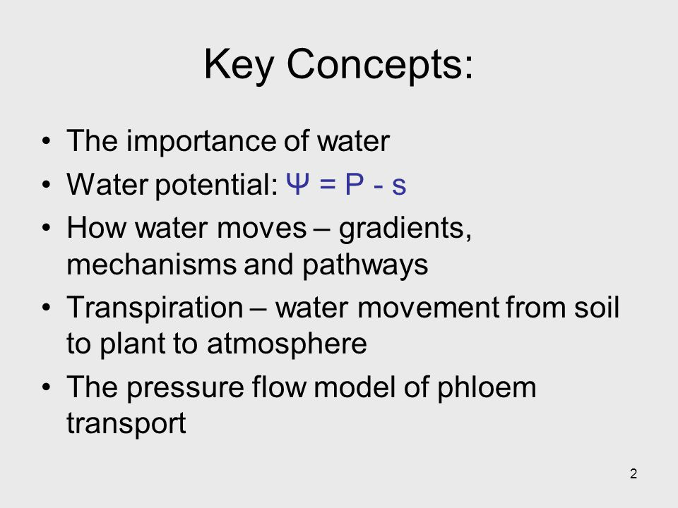 Key Concepts: The importance of water Water potential: Ψ = P - s