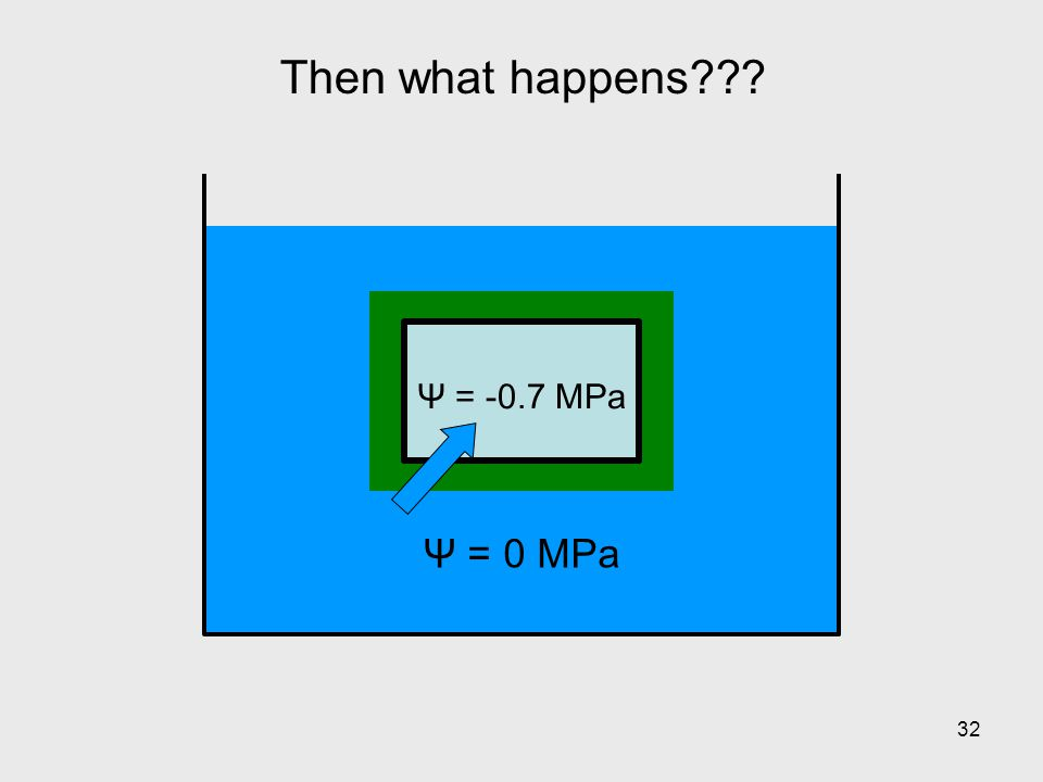 Then what happens Ψ = 0 MPa Ψ = -0.7 MPa