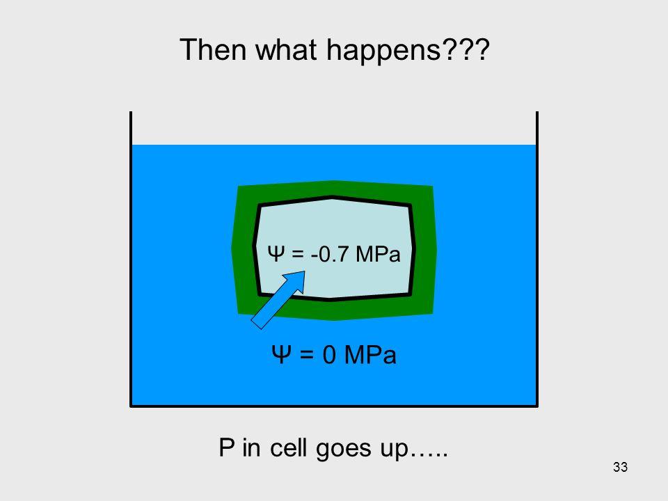 Then what happens Ψ = 0 MPa Ψ = -0.7 MPa P in cell goes up…..
