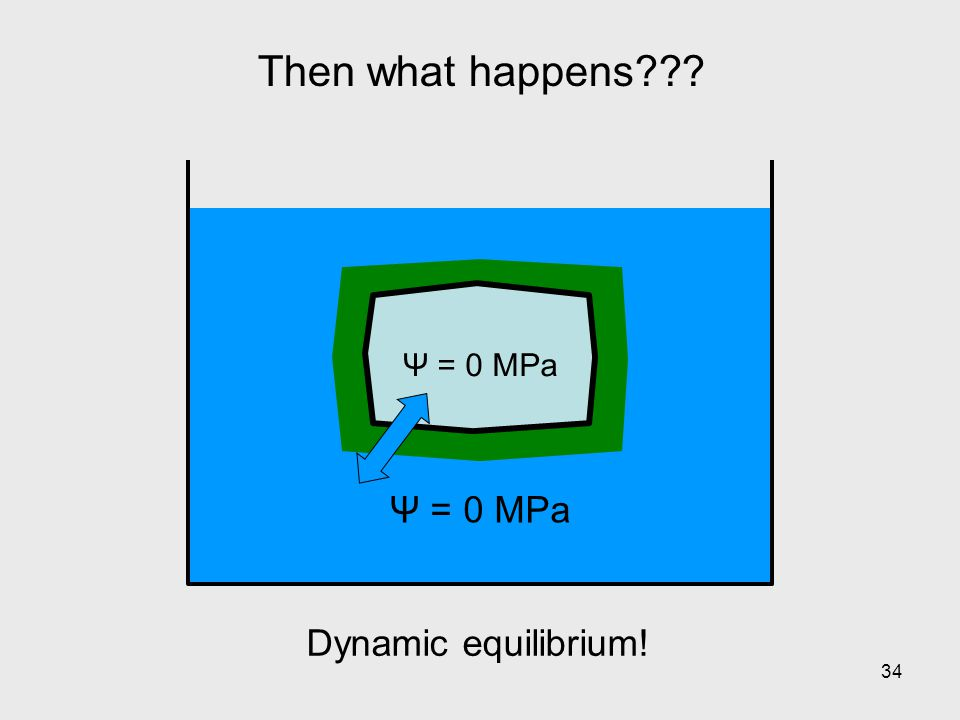 Then what happens Ψ = 0 MPa Dynamic equilibrium!