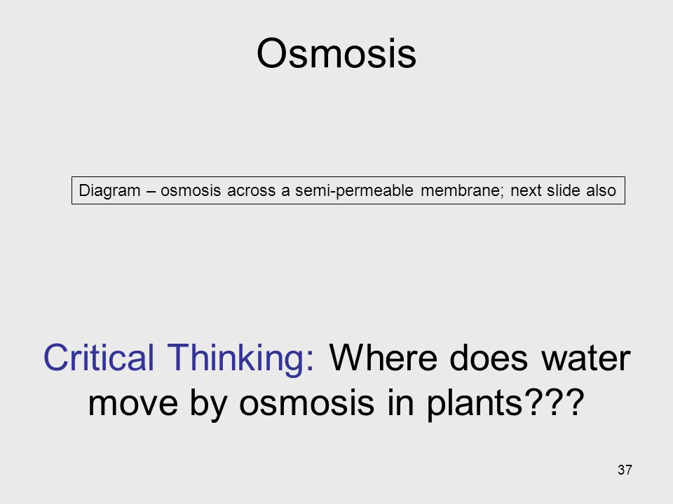 Critical Thinking: Where does water move by osmosis in plants
