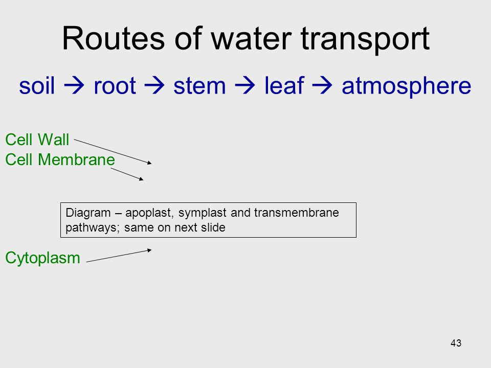 Routes of water transport soil  root  stem  leaf  atmosphere
