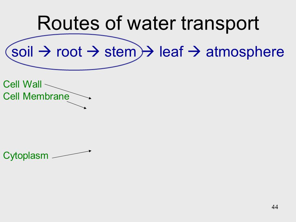 Routes of water transport soil  root  stem  leaf  atmosphere