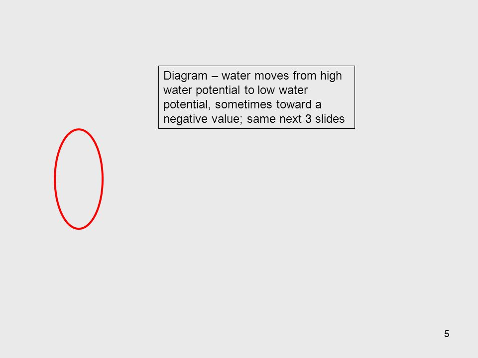 Diagram – water moves from high water potential to low water potential, sometimes toward a negative value; same next 3 slides