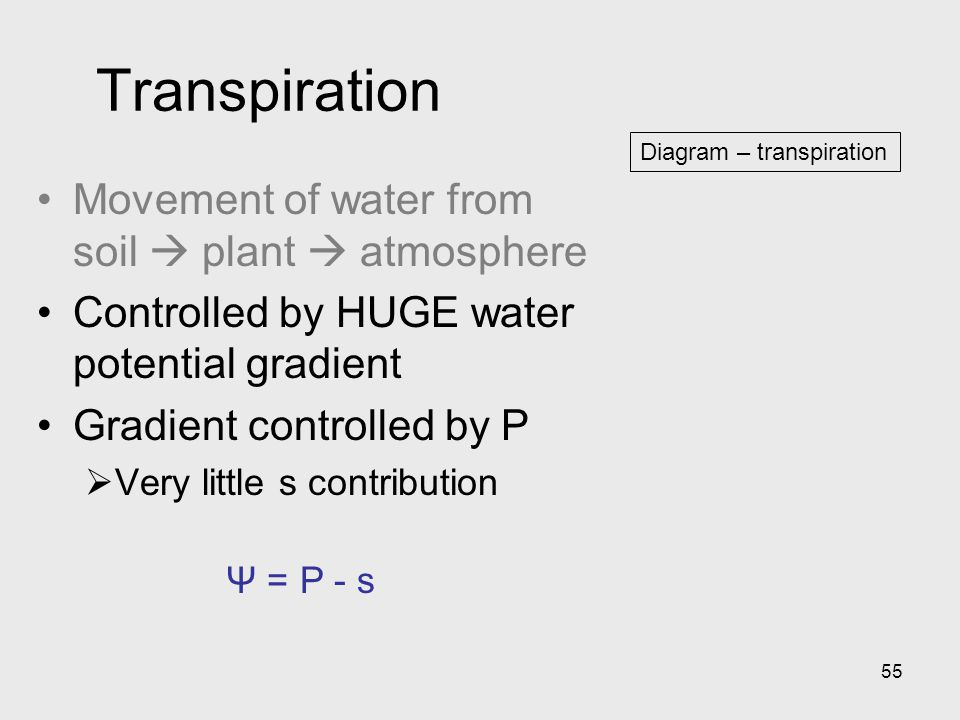 Transpiration Movement of water from soil  plant  atmosphere