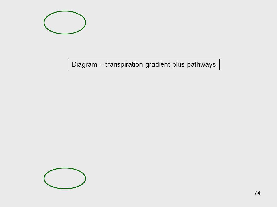 Diagram – transpiration gradient plus pathways