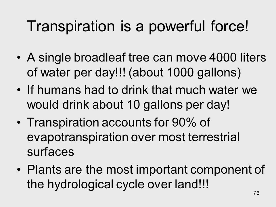 Transpiration is a powerful force!